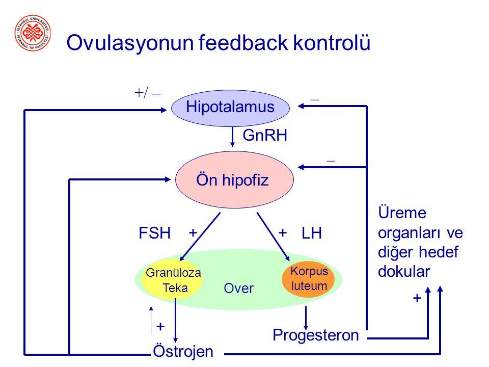 Spermatogenezin Feedback Kontrolü Testis Hipotalamus Ön Hipofiz Testis Leydig Sertoli ++ - - - GnRH+ FSHLH Testosteron (sadece LH) Inhibin (sadece FSH
