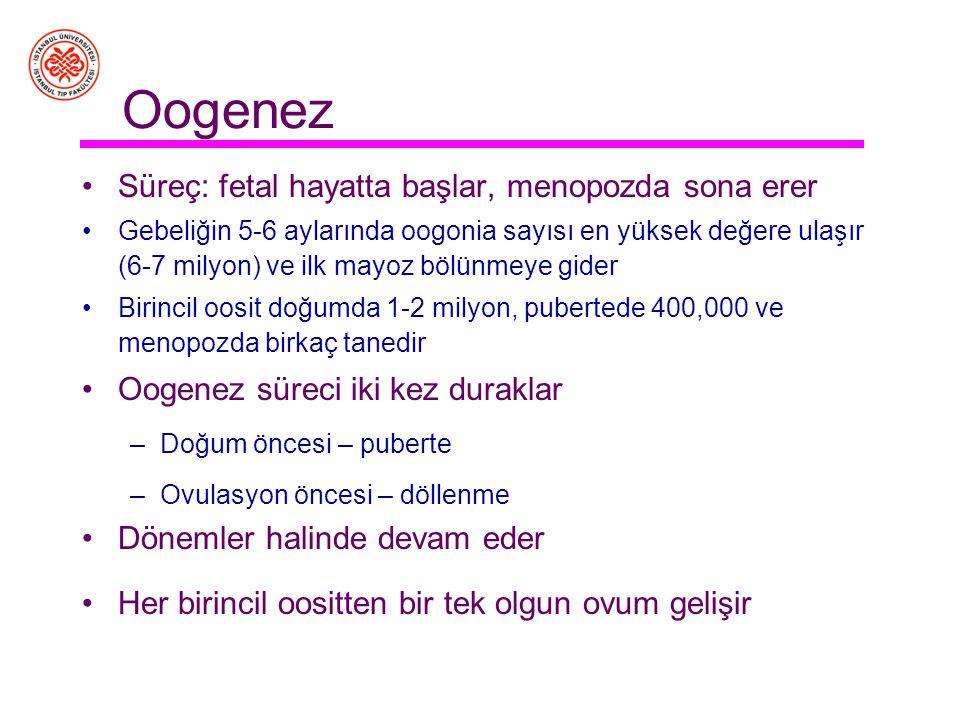 Oogenez Süreç: fetal hayatta başlar, menopozda sona erer Gebeliğin 5-6 aylarında oogonia sayısı en yüksek değere ulaşır (6-7 milyon) ve ilk mayoz bölünmeye gider Birincil oosit doğumda 1-2 milyon, pubertede 400,000 ve menopozda birkaç tanedir Oogenez süreci iki kez duraklar –Doğum öncesi – puberte –Ovulasyon öncesi – döllenme Dönemler halinde devam eder Her birincil oositten bir tek olgun ovum gelişir