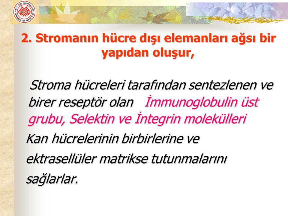 Stroma hücreleri tarafından sentezlenen ve birer reseptör olan İmmunoglobulin üst grubu, Selektin ve İntegrin molekülleri Stroma hücreleri tarafından
