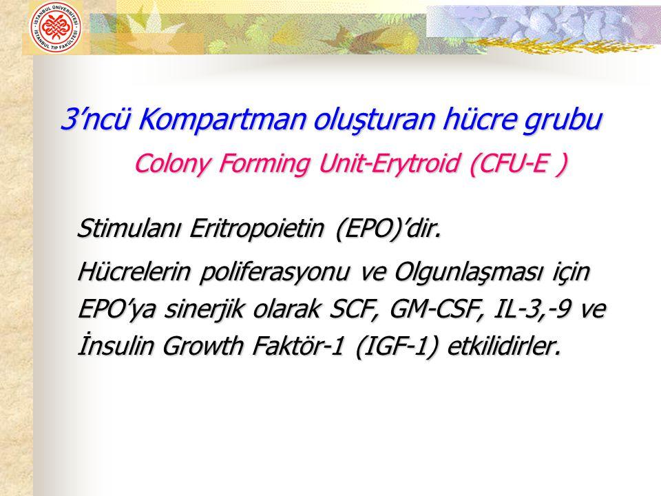 Stimulanı Eritropoietin (EPO)'dir. Stimulanı Eritropoietin (EPO)'dir. Hücrelerin poliferasyonu ve Olgunlaşması için EPO'ya sinerjik olarak SCF, GM-CSF