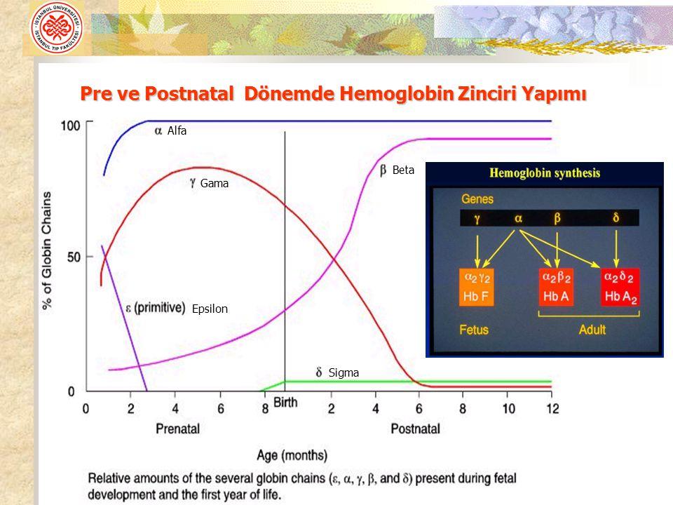 Pre ve Postnatal Dönemde Hemoglobin Zinciri Yapımı Alfa Beta Gama Epsilon Sigma