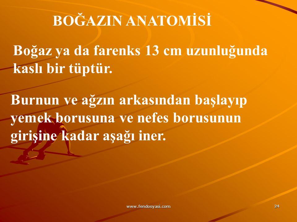 www.fendosyasi.com 24 BOĞAZIN ANATOMİSİ Boğaz ya da farenks 13 cm uzunluğunda kaslı bir tüptür. Burnun ve ağzın arkasından başlayıp yemek borusuna ve