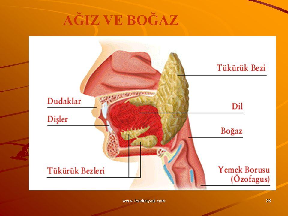 www.fendosyasi.com 28 AĞIZ VE BOĞAZ