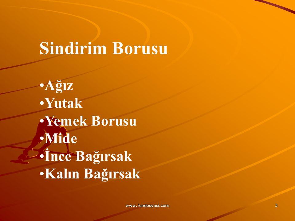 www.fendosyasi.com 24 BOĞAZIN ANATOMİSİ Boğaz ya da farenks 13 cm uzunluğunda kaslı bir tüptür.