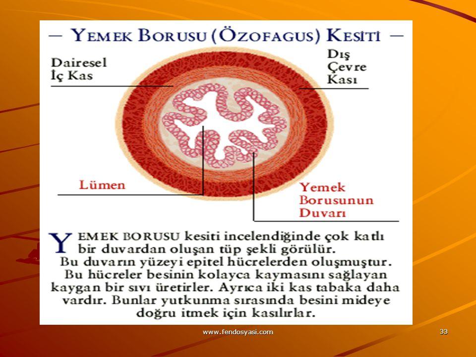 www.fendosyasi.com 33