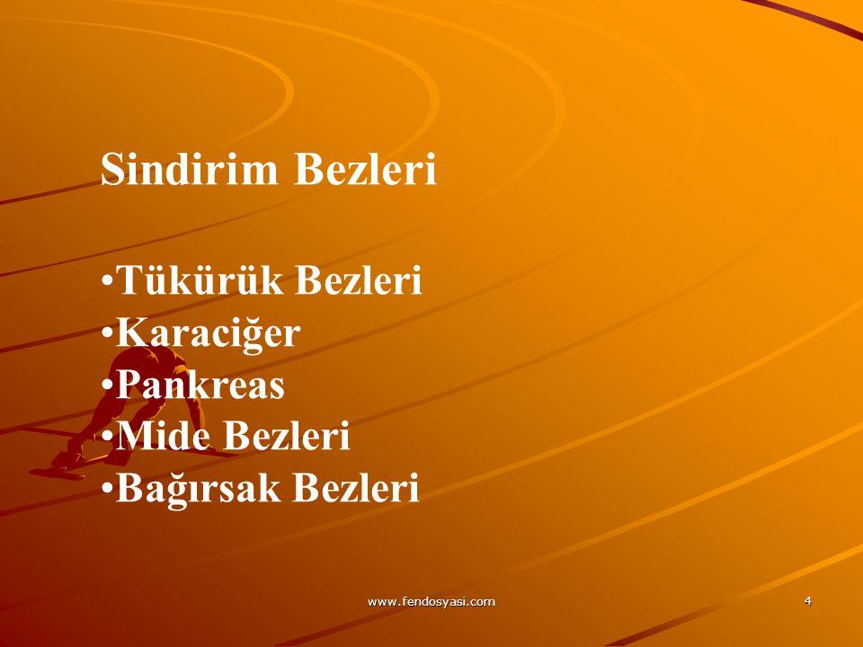 www.fendosyasi.com 15 DİŞ ÜÇ KISIMDAN OLUŞMUŞTUR