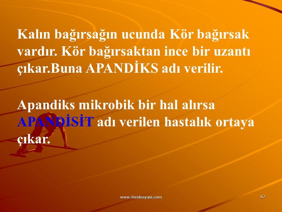www.fendosyasi.com 57 Kalın bağırsağın ucunda Kör bağırsak vardır. Kör bağırsaktan ince bir uzantı çıkar.Buna APANDİKS adı verilir. Apandiks mikrobik