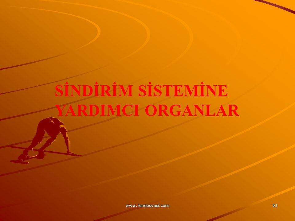 www.fendosyasi.com 61 SİNDİRİM SİSTEMİNE YARDIMCI ORGANLAR