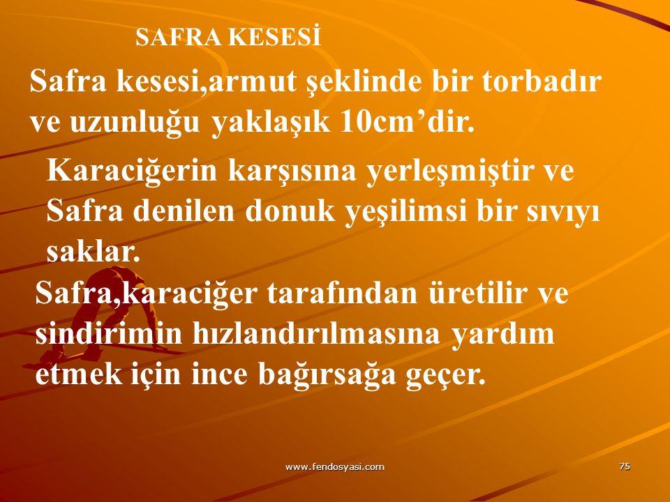 www.fendosyasi.com 75 SAFRA KESESİ Safra kesesi,armut şeklinde bir torbadır ve uzunluğu yaklaşık 10cm'dir. Karaciğerin karşısına yerleşmiştir ve Safra
