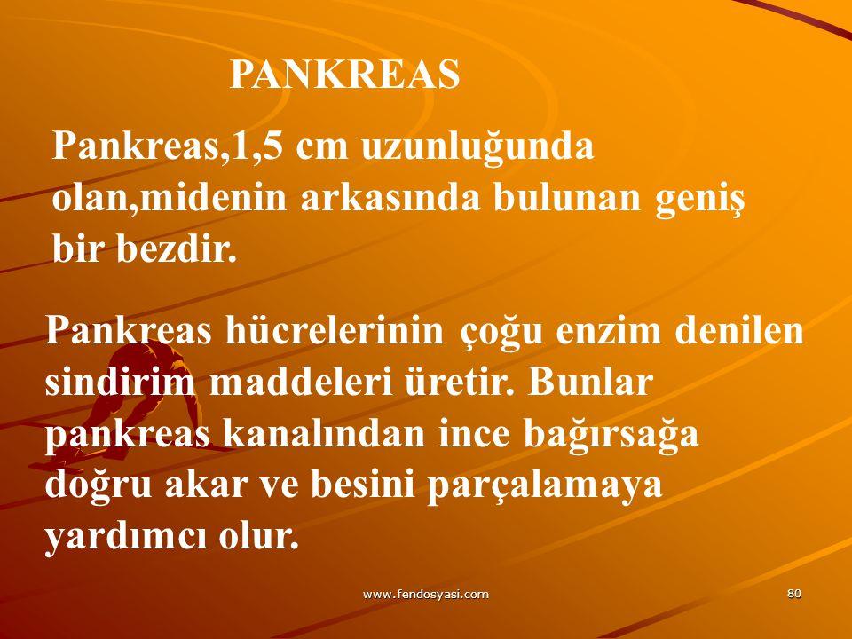 www.fendosyasi.com 80 PANKREAS Pankreas,1,5 cm uzunluğunda olan,midenin arkasında bulunan geniş bir bezdir. Pankreas hücrelerinin çoğu enzim denilen s