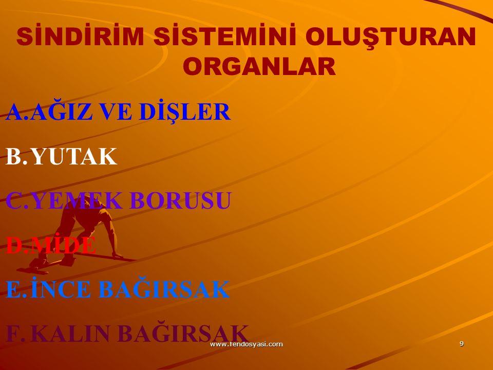 www.fendosyasi.com 90 5.Sindirime yardımcı organların isimlerini yazınız.