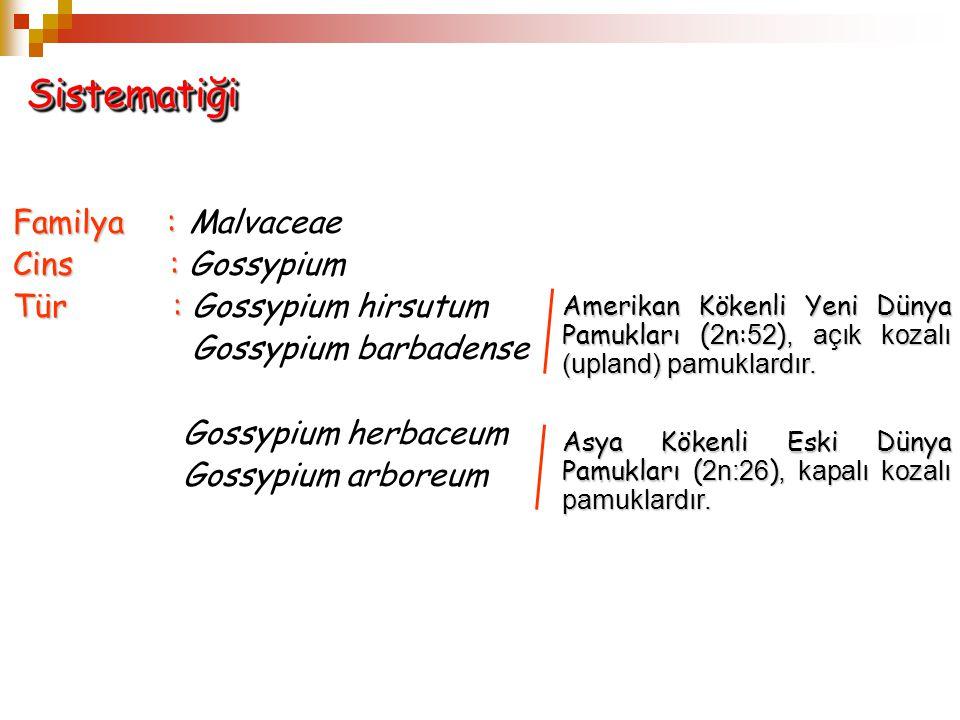 Familya: Familya: Malvaceae Cins : Cins : Gossypium Tür : Tür : Gossypium hirsutum Gossypium barbadense Gossypium herbaceum Gossypium arboreum Sistema