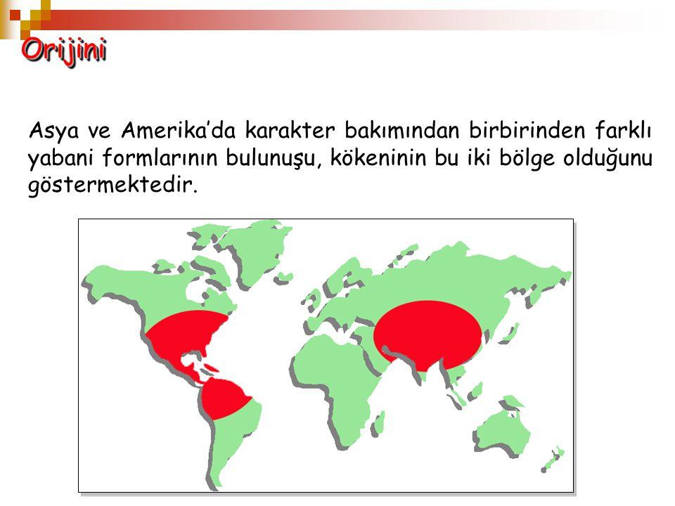 OrijiniOrijini Asya ve Amerika'da karakter bakımından birbirinden farklı yabani formlarının bulunuşu, kökeninin bu iki bölge olduğunu göstermektedir.