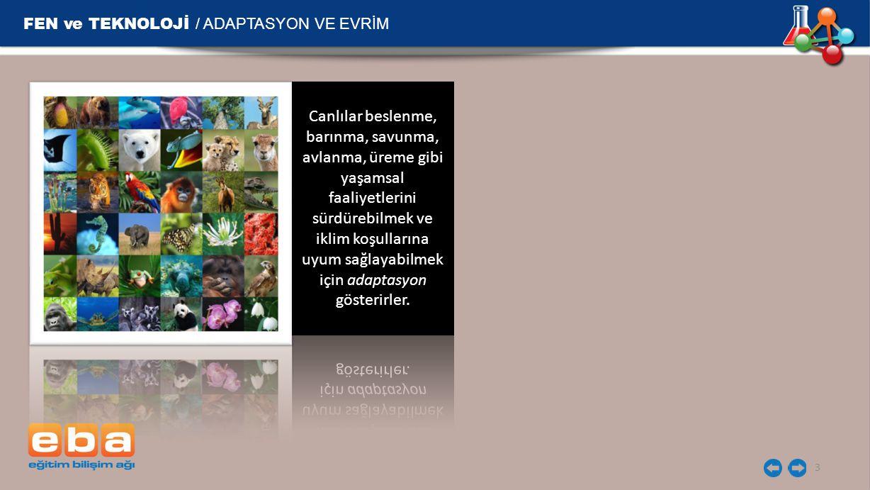 FEN ve TEKNOLOJİ / ADAPTASYON VE EVRİM 3