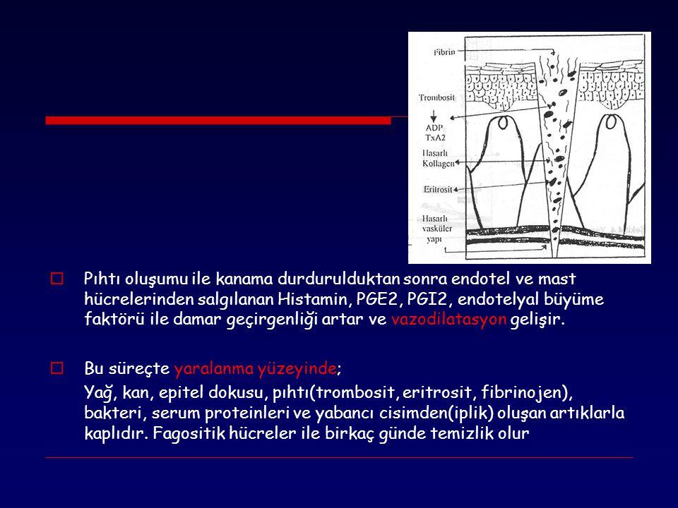  Pıhtı oluşumu ile kanama durdurulduktan sonra endotel ve mast hücrelerinden salgılanan Histamin, PGE2, PGI2, endotelyal büyüme faktörü ile damar geç