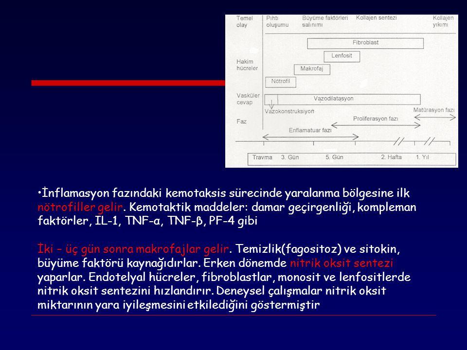 İnflamasyon fazındaki kemotaksis sürecinde yaralanma bölgesine ilk nötrofiller gelir. Kemotaktik maddeler: damar geçirgenliği, kompleman faktörler, IL