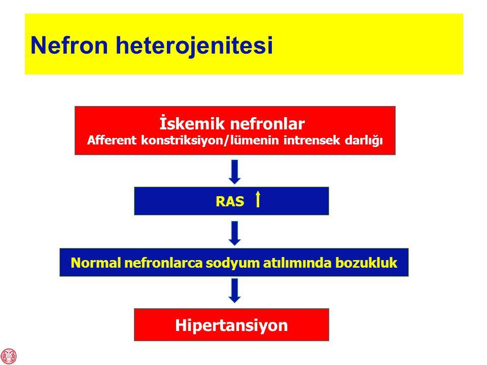 Nefron heterojenitesi İskemik nefronlar Afferent konstriksiyon/lümenin intrensek darlığı Hipertansiyon RAS Normal nefronlarca sodyum atılımında bozukluk