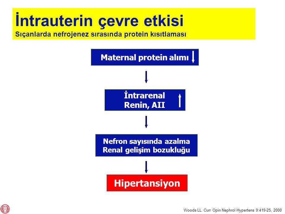 Maternal protein alımı Nefron sayısında azalma Renal gelişim bozukluğu İntrarenal Renin, AII Hipertansiyon Woods LL.