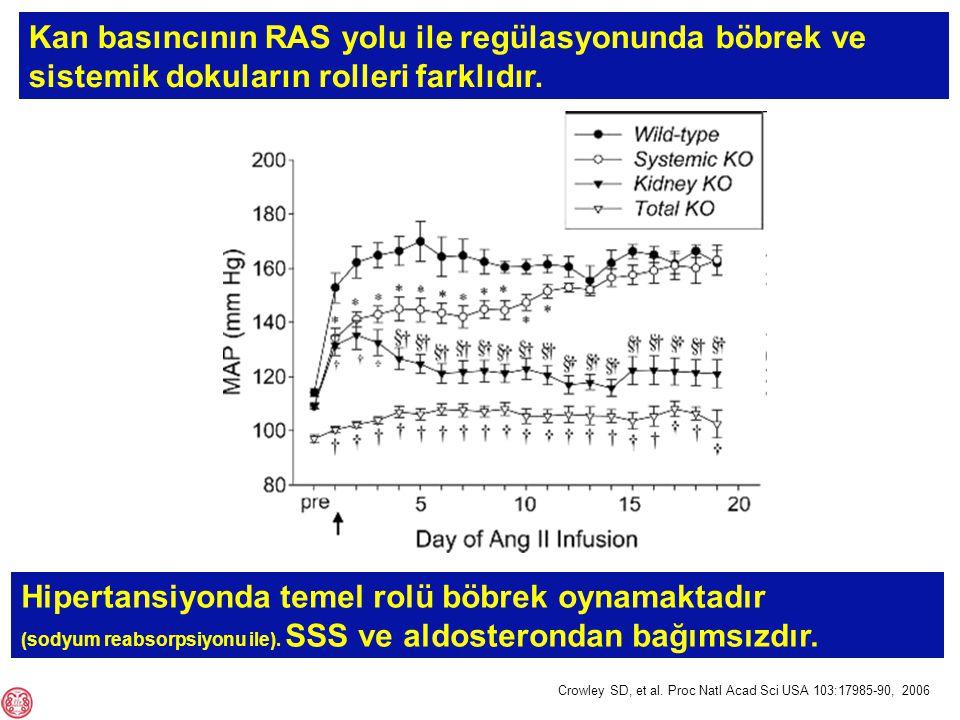 Kan basıncının RAS yolu ile regülasyonunda böbrek ve sistemik dokuların rolleri farklıdır.