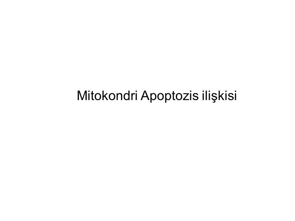 Mitokondri Apoptozis ilişkisi