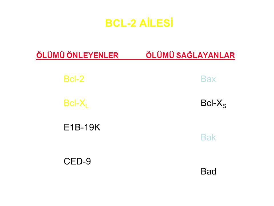 BCL-2 AİLESİ ÖLÜMÜ ÖNLEYENLERÖLÜMÜ SAĞLAYANLAR Bcl-2Bax Bcl-X L Bcl-X S E1B-19K Bak CED-9 Bad