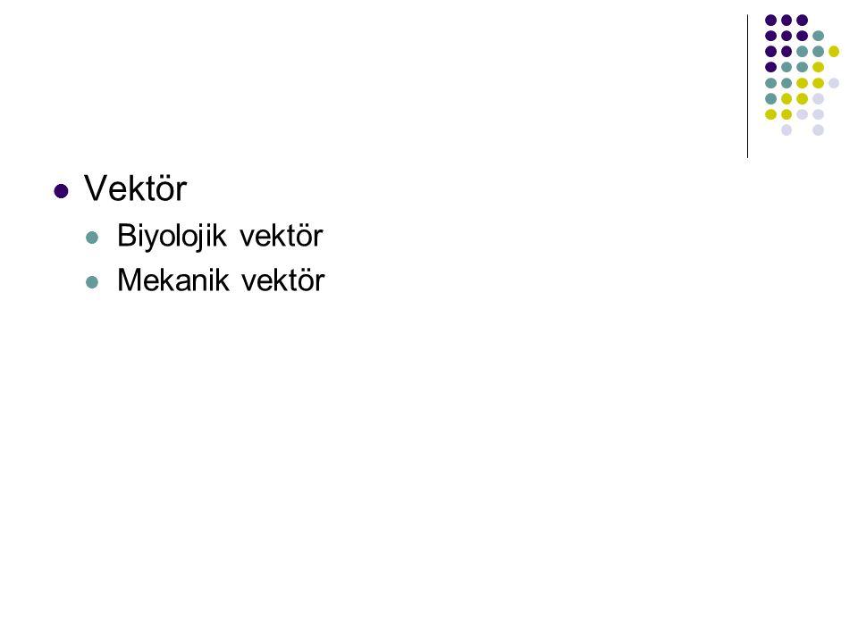 Vektör Biyolojik vektör Mekanik vektör