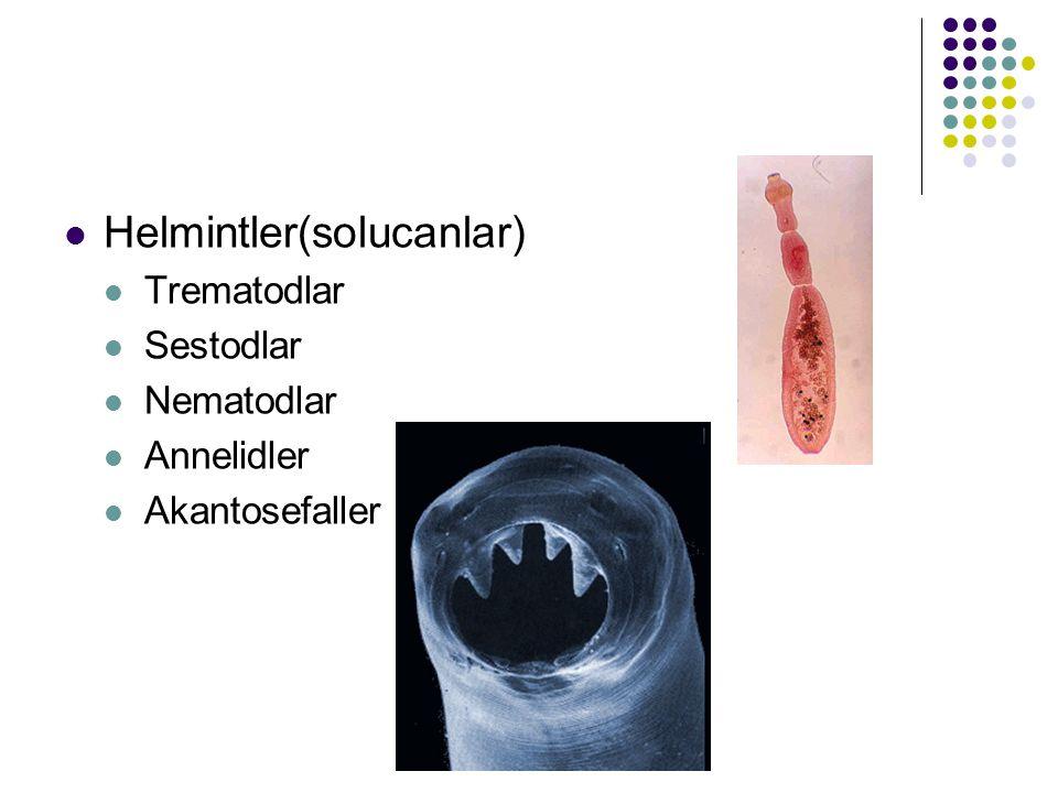 Helmintler(solucanlar) Trematodlar Sestodlar Nematodlar Annelidler Akantosefaller
