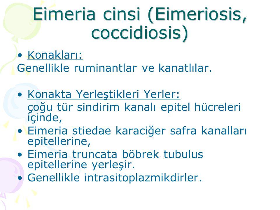 Eimeria cinsi (Eimeriosis, coccidiosis) Konakları: Genellikle ruminantlar ve kanatlılar. Konakta Yerleştikleri Yerler: çoğu tür sindirim kanalı epitel
