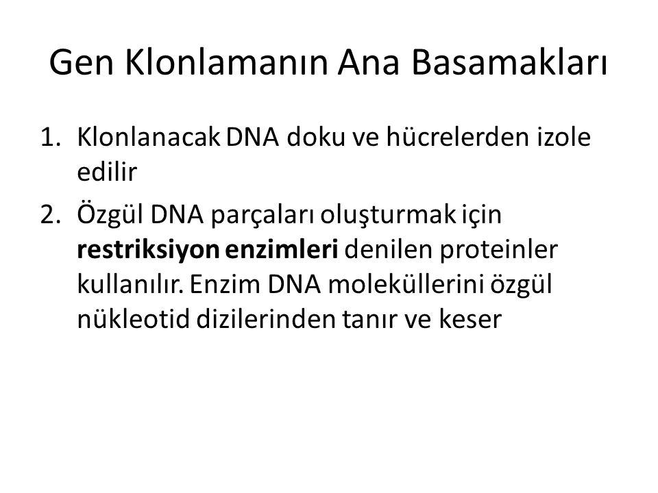 Gen Klonlamanın Ana Basamakları 1.Klonlanacak DNA doku ve hücrelerden izole edilir 2.Özgül DNA parçaları oluşturmak için restriksiyon enzimleri denile