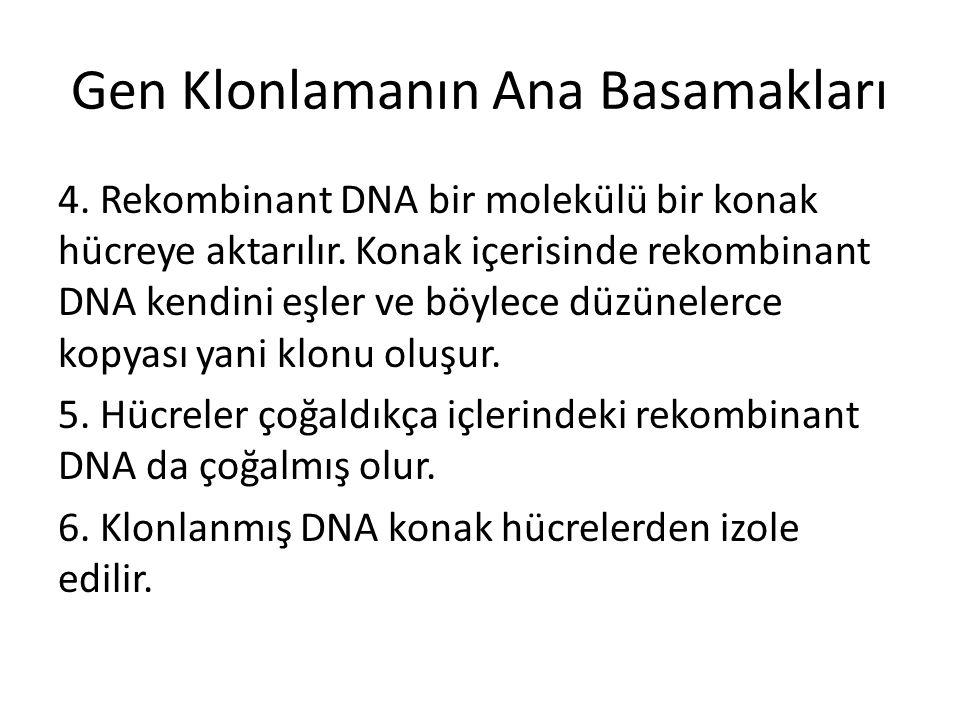 Gen Klonlamanın Ana Basamakları 4. Rekombinant DNA bir molekülü bir konak hücreye aktarılır. Konak içerisinde rekombinant DNA kendini eşler ve böylece
