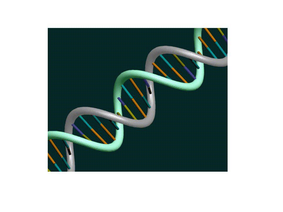 Gen Klonlamanın Ana Basamakları 4.Rekombinant DNA bir molekülü bir konak hücreye aktarılır.
