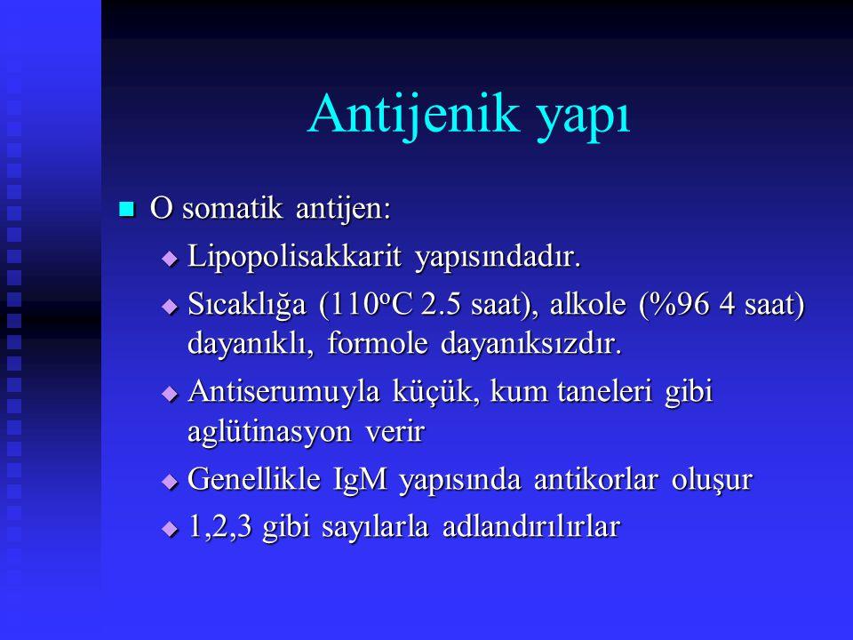 Antijenik yapı O somatik antijen: O somatik antijen:  Lipopolisakkarit yapısındadır.  Sıcaklığa (110 o C 2.5 saat), alkole (%96 4 saat) dayanıklı, f