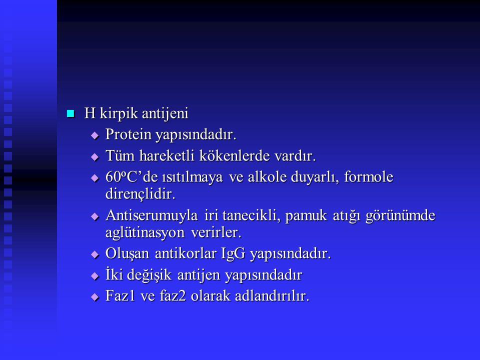 H kirpik antijeni H kirpik antijeni  Protein yapısındadır.  Tüm hareketli kökenlerde vardır.  60 o C'de ısıtılmaya ve alkole duyarlı, formole diren