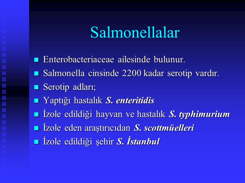 Salmonellalar Enterobacteriaceae ailesinde bulunur. Enterobacteriaceae ailesinde bulunur. Salmonella cinsinde 2200 kadar serotip vardır. Salmonella ci