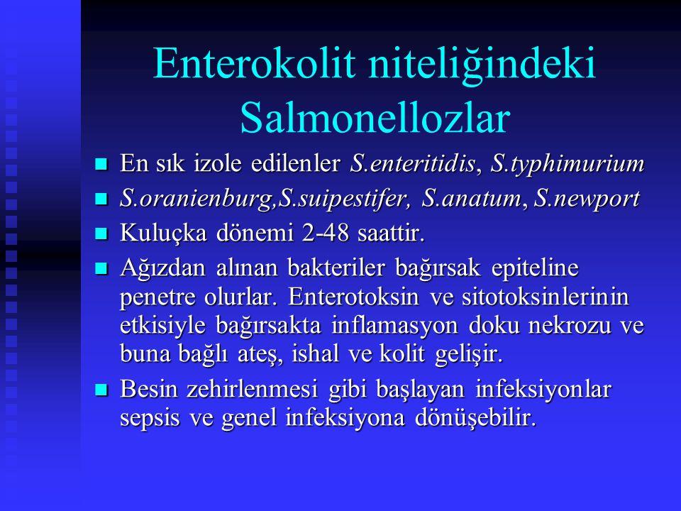 Enterokolit niteliğindeki Salmonellozlar En sık izole edilenler S.enteritidis, S.typhimurium En sık izole edilenler S.enteritidis, S.typhimurium S.ora