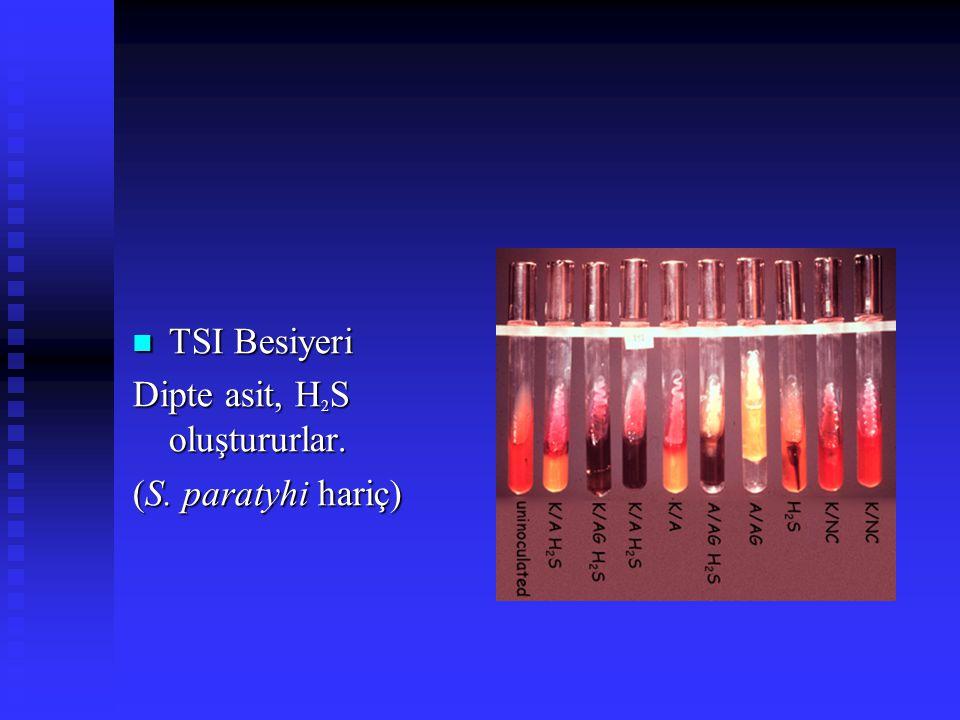 TSI Besiyeri TSI Besiyeri Dipte asit, H 2 S oluştururlar. (S. paratyhi hariç)