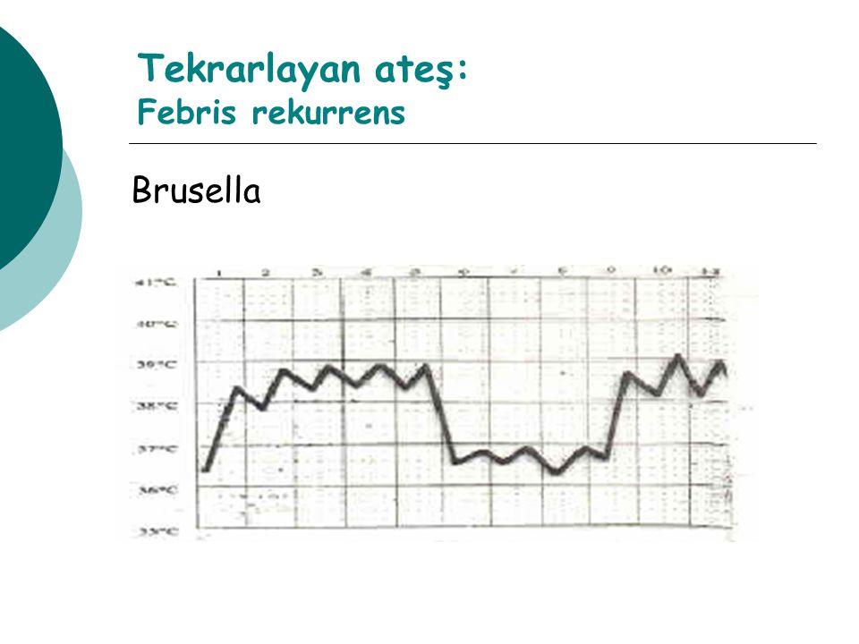 Tekrarlayan ateş: Febris rekurrens Brusella