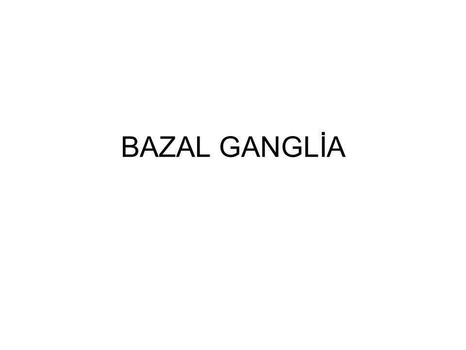 BAZAL GANGLİA