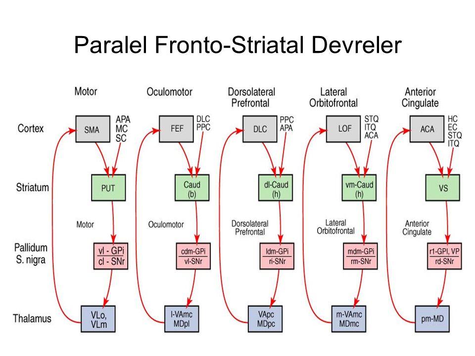 Paralel Fronto-Striatal Devreler