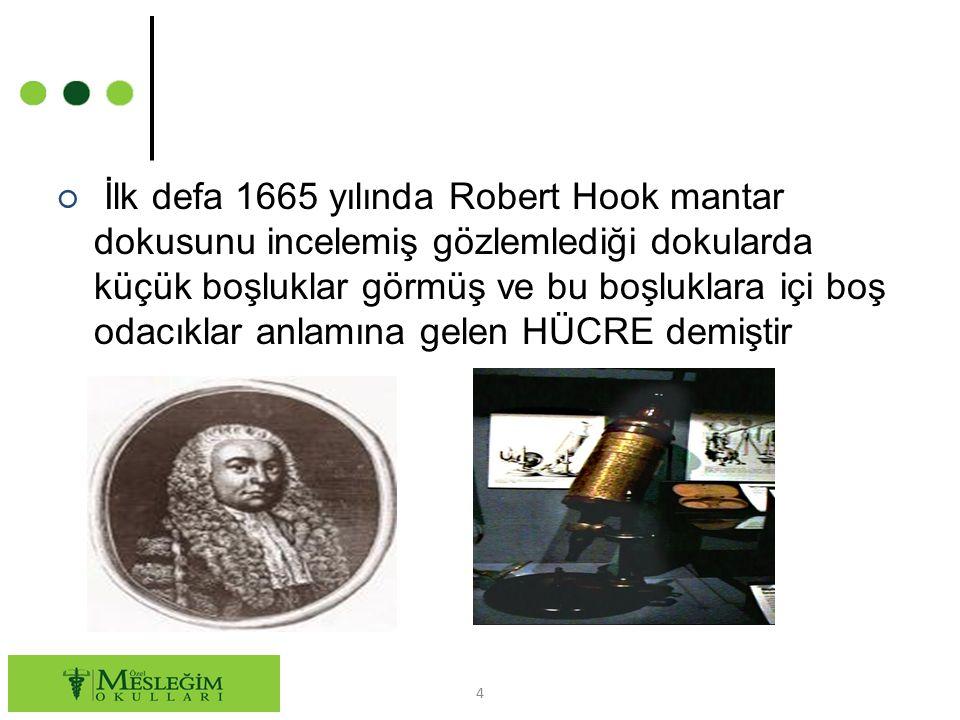 ○ İlk defa 1665 yılında Robert Hook mantar dokusunu incelemiş gözlemlediği dokularda küçük boşluklar görmüş ve bu boşluklara içi boş odacıklar anlamına gelen HÜCRE demiştir 4