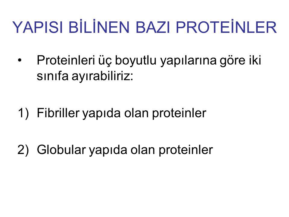 YAPISI BİLİNEN BAZI PROTEİNLER Proteinleri üç boyutlu yapılarına göre iki sınıfa ayırabiliriz: 1)Fibriller yapıda olan proteinler 2)Globular yapıda ol