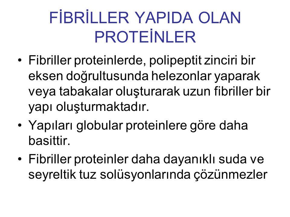FİBRİLLER YAPIDA OLAN PROTEİNLER Fibriller proteinlerde, polipeptit zinciri bir eksen doğrultusunda helezonlar yaparak veya tabakalar oluşturarak uzun