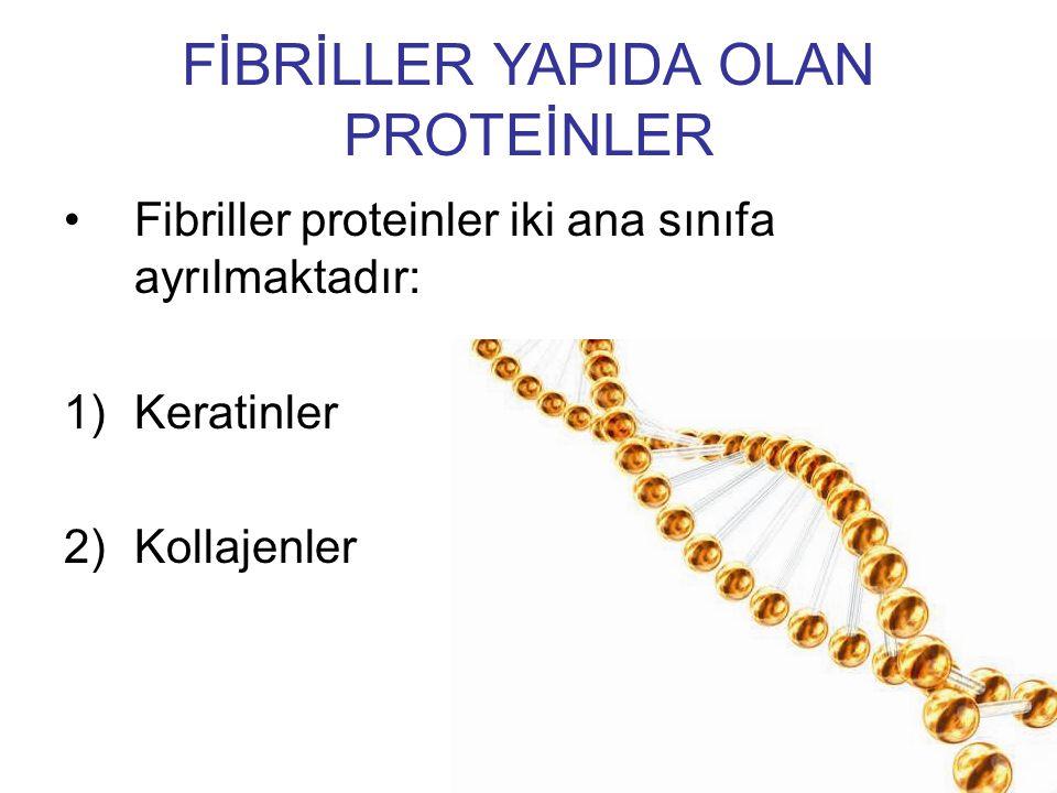 Fibriller proteinler iki ana sınıfa ayrılmaktadır: 1)Keratinler 2)Kollajenler FİBRİLLER YAPIDA OLAN PROTEİNLER