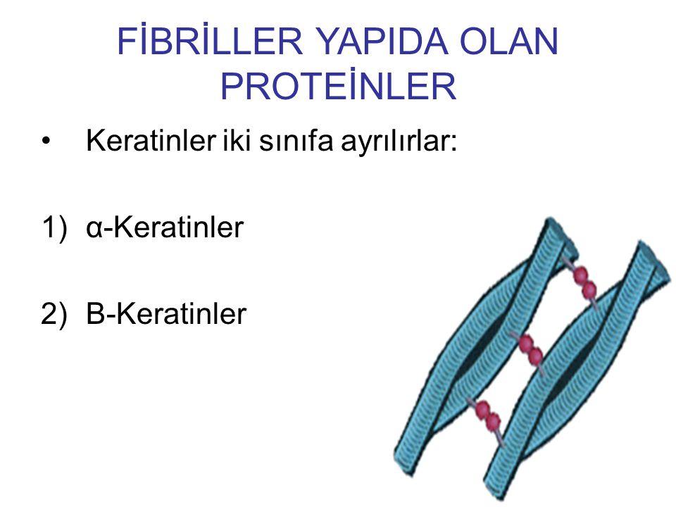 Keratinler iki sınıfa ayrılırlar: 1)α-Keratinler 2)Β-Keratinler FİBRİLLER YAPIDA OLAN PROTEİNLER
