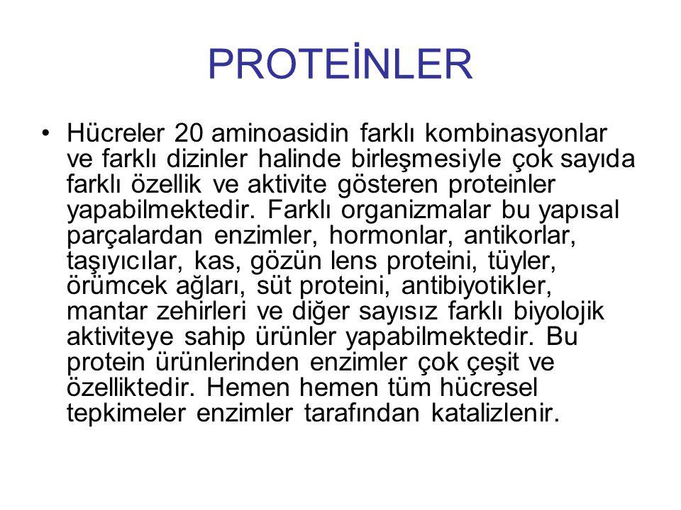 PROTEİNLER Hücreler 20 aminoasidin farklı kombinasyonlar ve farklı dizinler halinde birleşmesiyle çok sayıda farklı özellik ve aktivite gösteren prote