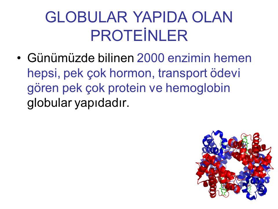 Günümüzde bilinen 2000 enzimin hemen hepsi, pek çok hormon, transport ödevi gören pek çok protein ve hemoglobin globular yapıdadır. GLOBULAR YAPIDA OL