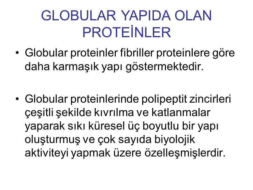 Globular proteinler fibriller proteinlere göre daha karmaşık yapı göstermektedir. Globular proteinlerinde polipeptit zincirleri çeşitli şekilde kıvrıl