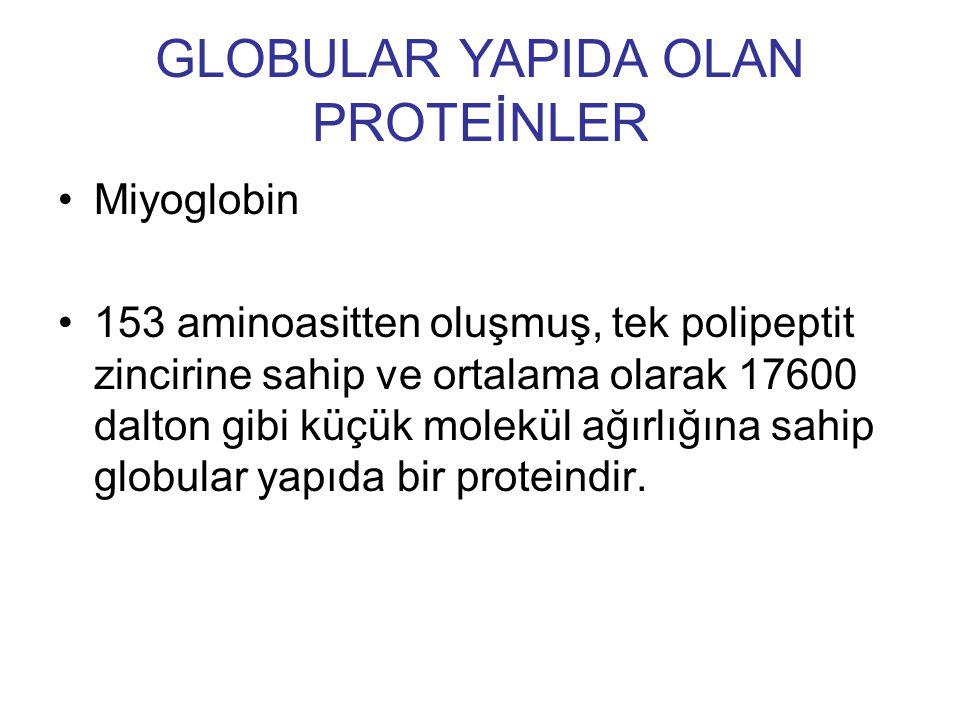 Miyoglobin 153 aminoasitten oluşmuş, tek polipeptit zincirine sahip ve ortalama olarak 17600 dalton gibi küçük molekül ağırlığına sahip globular yapıd