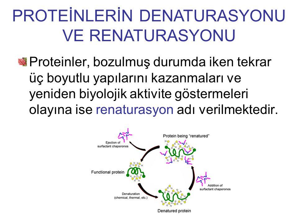Proteinler, bozulmuş durumda iken tekrar üç boyutlu yapılarını kazanmaları ve yeniden biyolojik aktivite göstermeleri olayına ise renaturasyon adı ver