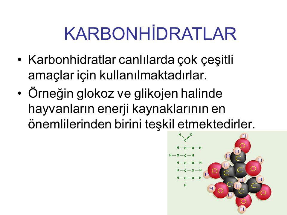 Karbonhidratlar canlılarda çok çeşitli amaçlar için kullanılmaktadırlar. Örneğin glokoz ve glikojen halinde hayvanların enerji kaynaklarının en önemli